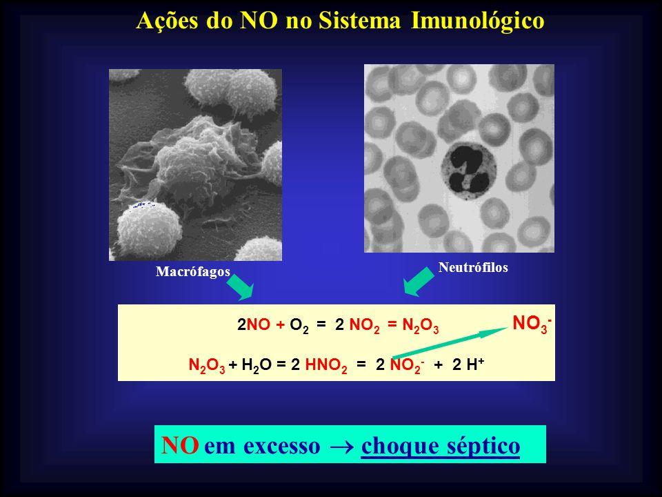 Ações do NO no Sistema Imunológico Macrófagos Neutrófilos 2NO + O 2 = 2 NO 2 = N 2 O 3 N 2 O 3 + H 2 O = 2 HNO 2 = 2 NO 2 -- + 2 H + NO 3 - NO em exce