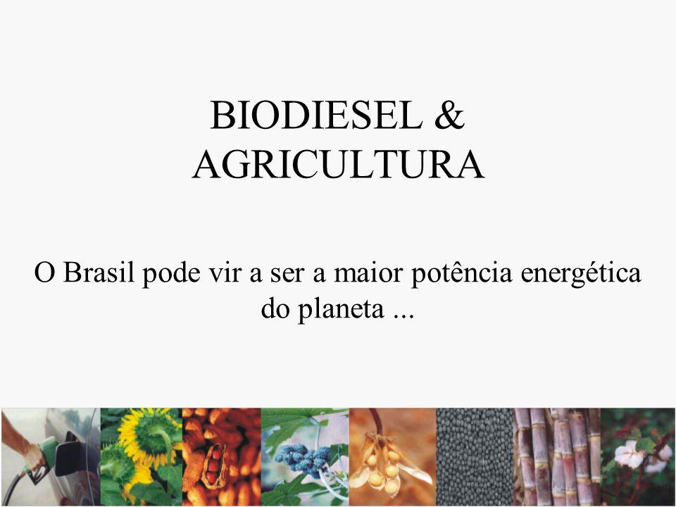 Oleaginosas Potenciais X Consumo de Diesel, por região Consumo: 8% Consumo: 12% Consumo: 21% Consumo: 15% Consumo: 44% Dendê, soja, babaçu, cupuaçu Soja, mamona, coco, algodão, dendê, amendoim Soja, canola, algodão, girassol, amendoim Babaçu, soja, mamona, coco, algodão, dendê, amendoim Soja, mamona, coco, algodão, dendê, amendoim