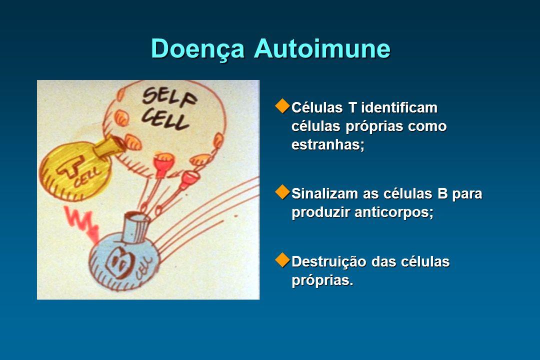 Doença Autoimune Células T identificam células próprias como estranhas; Células T identificam células próprias como estranhas; Sinalizam as células B
