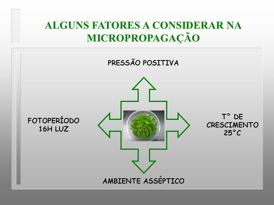ALGUNS FATORES A CONSIDERAR NA MICROPROPAGAÇÃO FOTOPERÍODO 16H LUZ AMBIENTE ASSÉPTICO T° DE CRESCIMENTO 25°C PRESSÃO POSITIVA