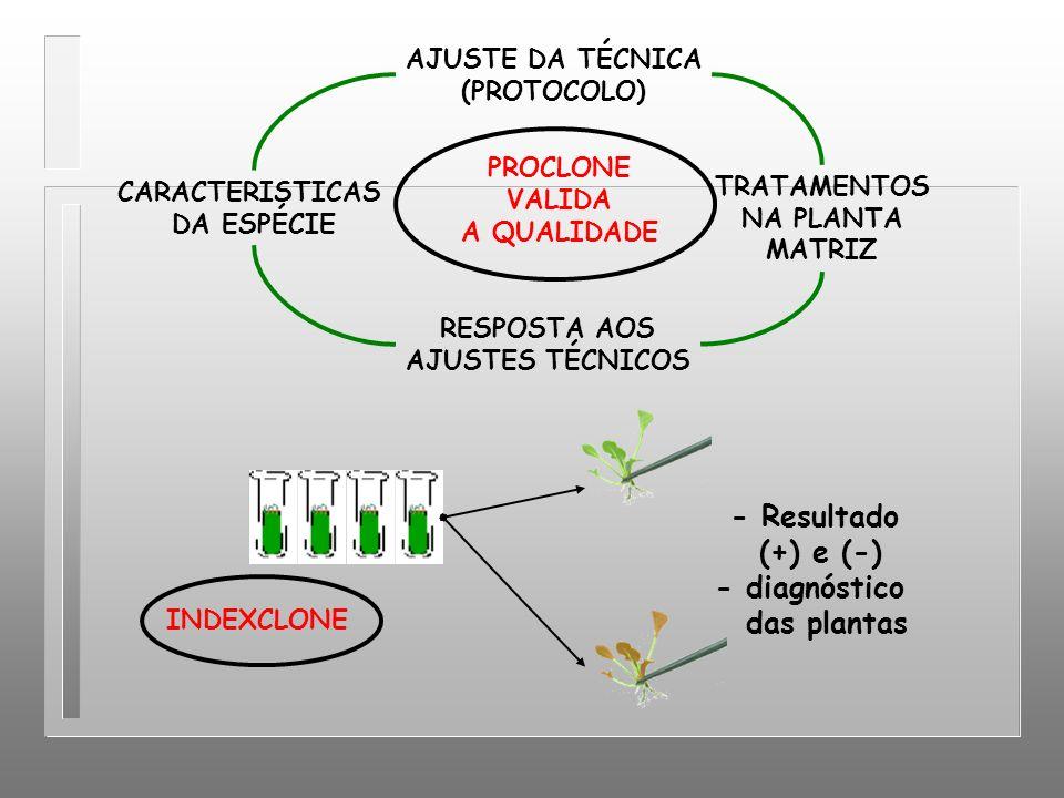 AJUSTE DA TÉCNICA (PROTOCOLO) CARACTERISTICAS DA ESPÉCIE RESPOSTA AOS AJUSTES TÉCNICOS TRATAMENTOS NA PLANTA MATRIZ PROCLONE VALIDA A QUALIDADE - Resu