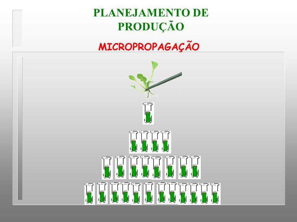 MICROPROPAGAÇÃO PLANEJAMENTO DE PRODUÇÃO