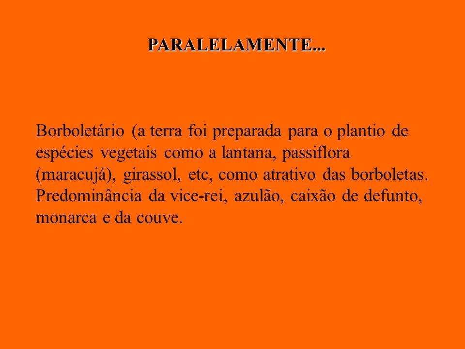 Borboletário (a terra foi preparada para o plantio de espécies vegetais como a lantana, passiflora (maracujá), girassol, etc, como atrativo das borbol