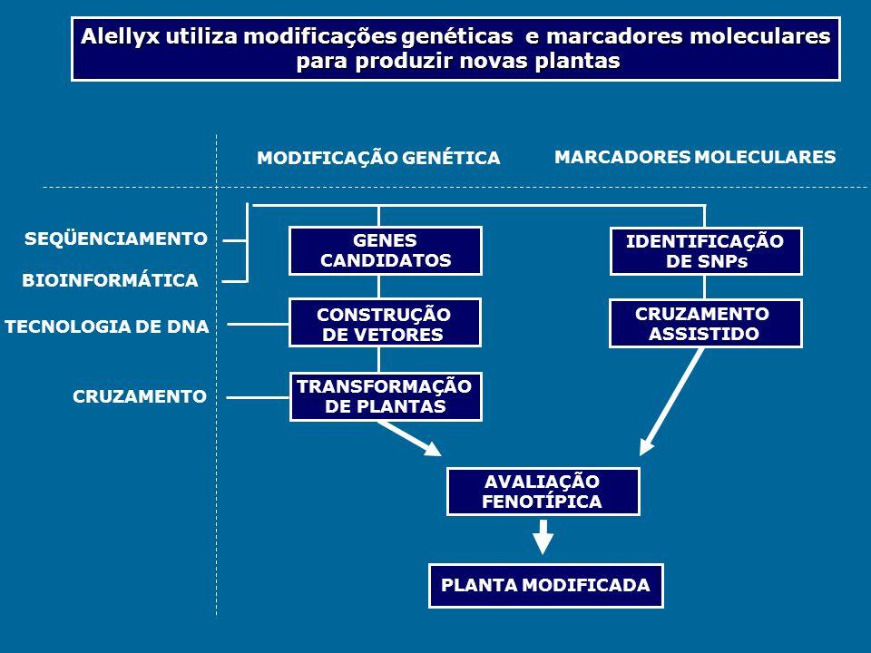 Alellyx utiliza modificações genéticas e marcadores moleculares para produzir novas plantas SEQÜENCIAMENTO BIOINFORMÁTICA TECNOLOGIA DE DNA CRUZAMENTO