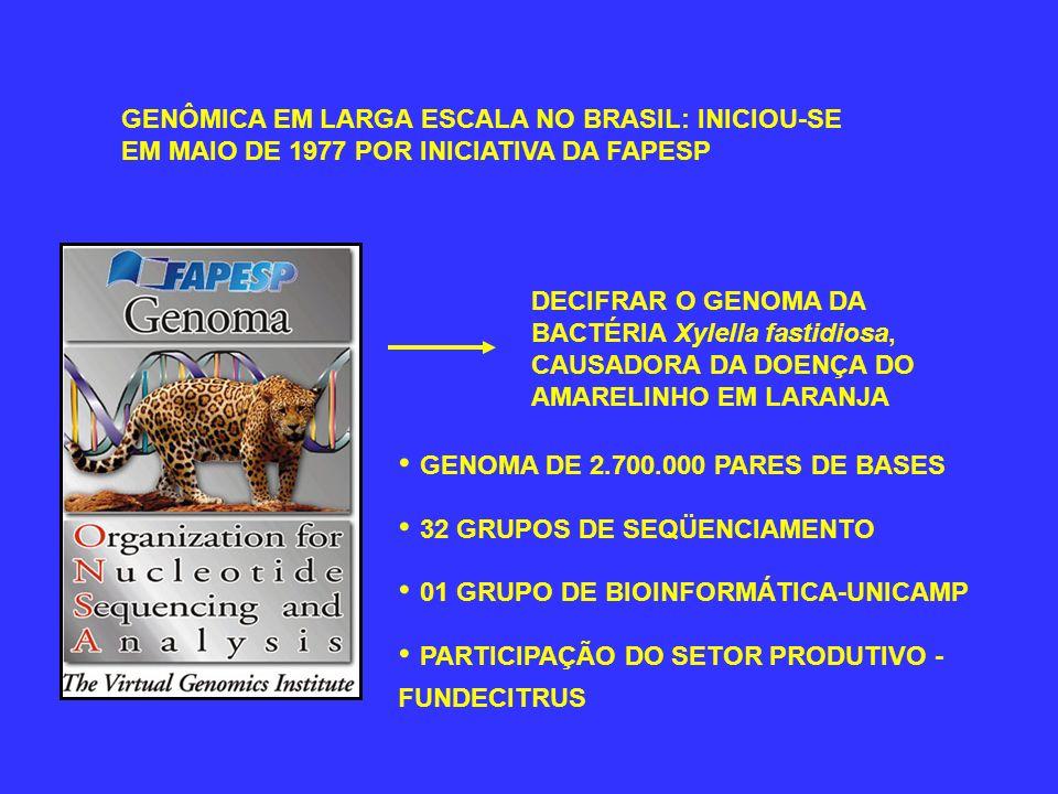 GENÔMICA EM LARGA ESCALA NO BRASIL: INICIOU-SE EM MAIO DE 1977 POR INICIATIVA DA FAPESP DECIFRAR O GENOMA DA BACTÉRIA Xylella fastidiosa, CAUSADORA DA DOENÇA DO AMARELINHO EM LARANJA GENOMA DE 2.700.000 PARES DE BASES 32 GRUPOS DE SEQÜENCIAMENTO 01 GRUPO DE BIOINFORMÁTICA-UNICAMP PARTICIPAÇÃO DO SETOR PRODUTIVO - FUNDECITRUS