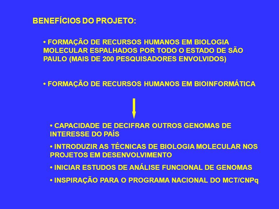 BENEFÍCIOS DO PROJETO: FORMAÇÃO DE RECURSOS HUMANOS EM BIOLOGIA MOLECULAR ESPALHADOS POR TODO O ESTADO DE SÃO PAULO (MAIS DE 200 PESQUISADORES ENVOLVI