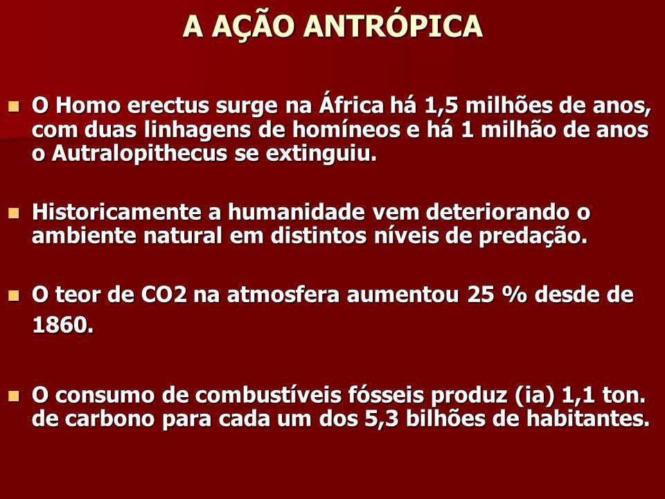 A AÇÃO ANTRÓPICA Consumo de combustíveis fósseis promove Consumo de combustíveis fósseis promove 50 % das emissões de CO2.
