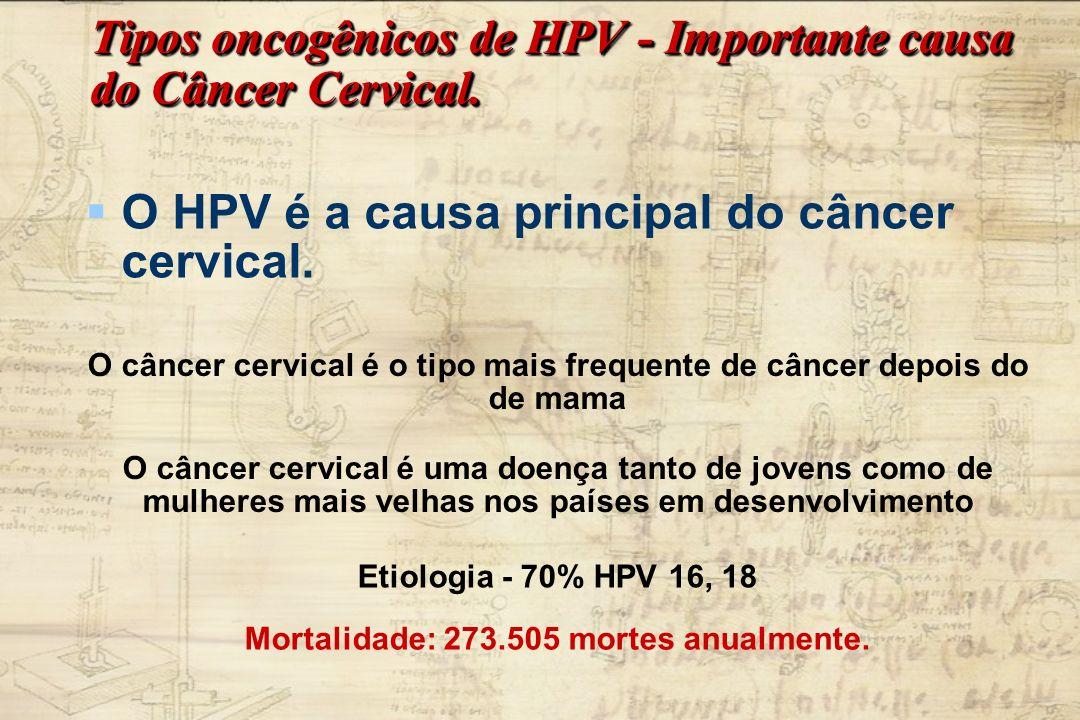 Tipos oncogênicos de HPV - Importante causa do Câncer Cervical. O HPV é a causa principal do câncer cervical. O câncer cervical é o tipo mais frequent