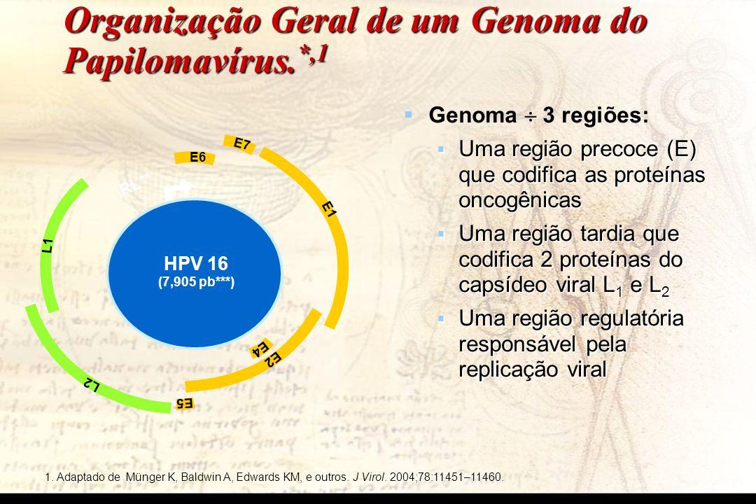 Organização Geral de um Genoma do Papilomavírus. *,1 1. Adaptado de Münger K, Baldwin A, Edwards KM, e outros. J Virol. 2004;78:11451–11460. RL** L1 L