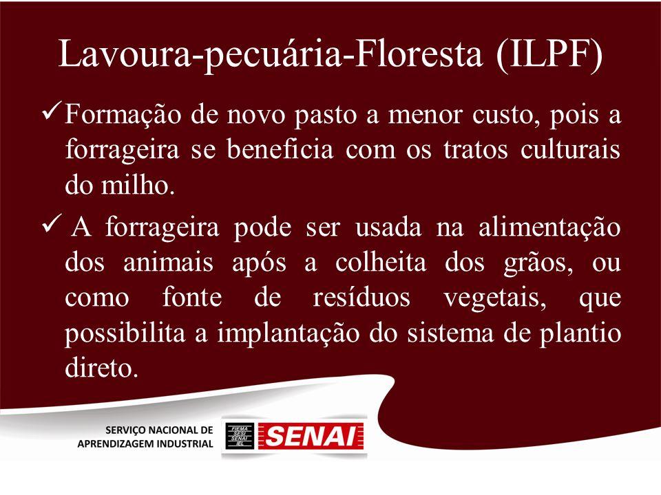 Lavoura-pecuária-Floresta (ILPF) Formação de novo pasto a menor custo, pois a forrageira se beneficia com os tratos culturais do milho. A forrageira p