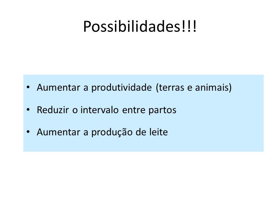 Possibilidades!!! Aumentar a produtividade (terras e animais) Reduzir o intervalo entre partos Aumentar a produção de leite