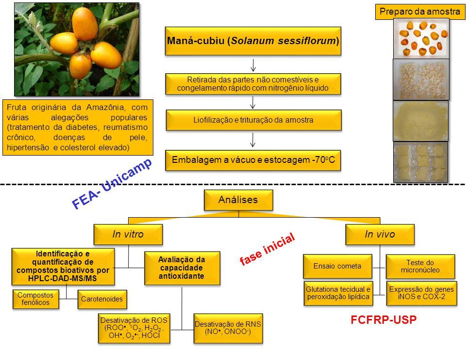 Análises In vitro Identificação e quantificação de compostos bioativos por HPLC-DAD-MS/MS Compostos fenólicos Carotenoides Avaliação da capacidade ant
