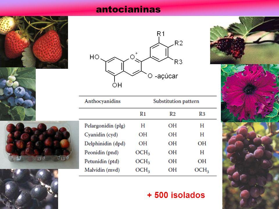 -açúcar antocianinas + 500 isolados