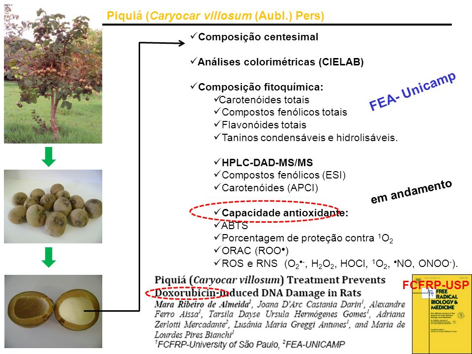 Piquiá (Caryocar villosum (Aubl.) Pers) Composição centesimal Análises colorimétricas (CIELAB) Composição fitoquímica: Carotenóides totais Compostos f