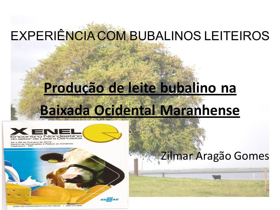 EXPERIÊNCIA COM BUBALINOS LEITEIROS Produção de leite bubalino na Baixada Ocidental Maranhense Zilmar Aragão Gomes