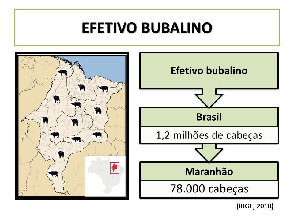 EFETIVO BUBALINO Maranhão 78.000 cabeças Brasil 1,2 milhões de cabeças Efetivo bubalino (IBGE, 2010)