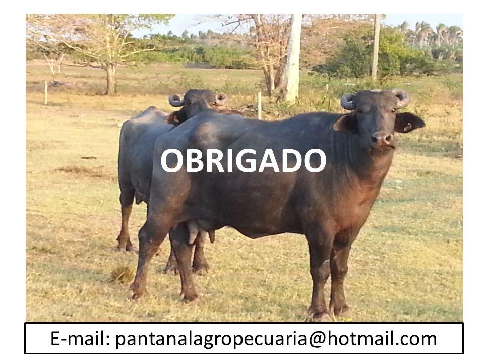 OBRIGADO E-mail: pantanalagropecuaria@hotmail.com