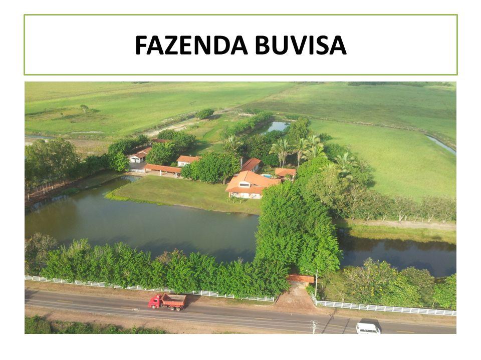 FAZENDA BUVISA