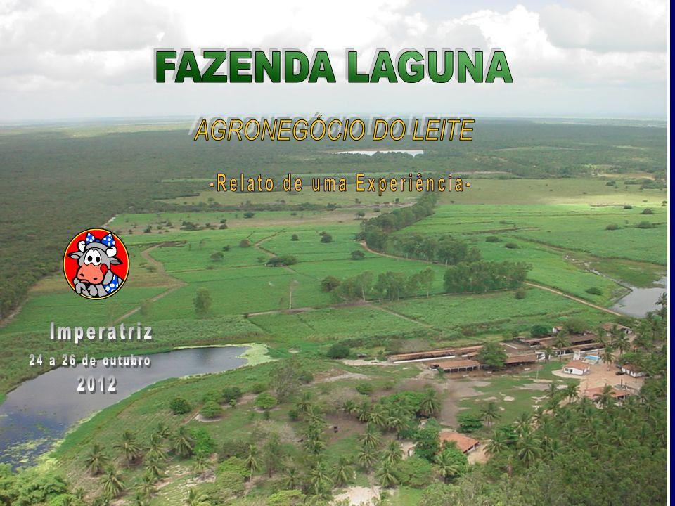 Rebanho bubalino no Brasil O rebanho de búfalos foi o que teve o crescimento mais expressivo no país entre 2010 e 2011, com aumento de 7,8% contra 1,6% dos bovinos.
