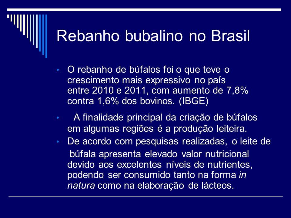 Rebanho bubalino no Brasil O rebanho de búfalos foi o que teve o crescimento mais expressivo no país entre 2010 e 2011, com aumento de 7,8% contra 1,6