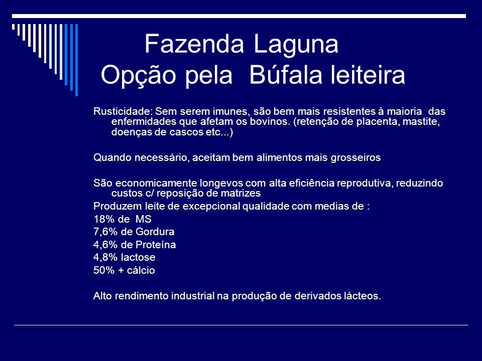 Fazenda Laguna Opção pela Búfala leiteira Rusticidade: Sem serem imunes, são bem mais resistentes à maioria das enfermidades que afetam os bovinos. (r