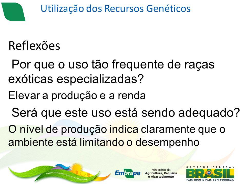 Utilização dos Recursos Genéticos Reflexões Por que o uso tão frequente de raças exóticas especializadas.