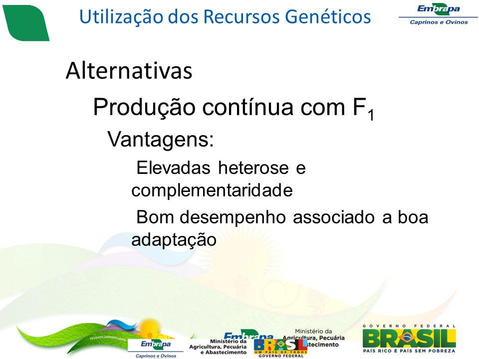 Alternativas – Produção contínua com F 1 Vantagens: Elevadas heterose e complementaridade Bom desempenho associado a boa adaptação Utilização dos Recursos Genéticos