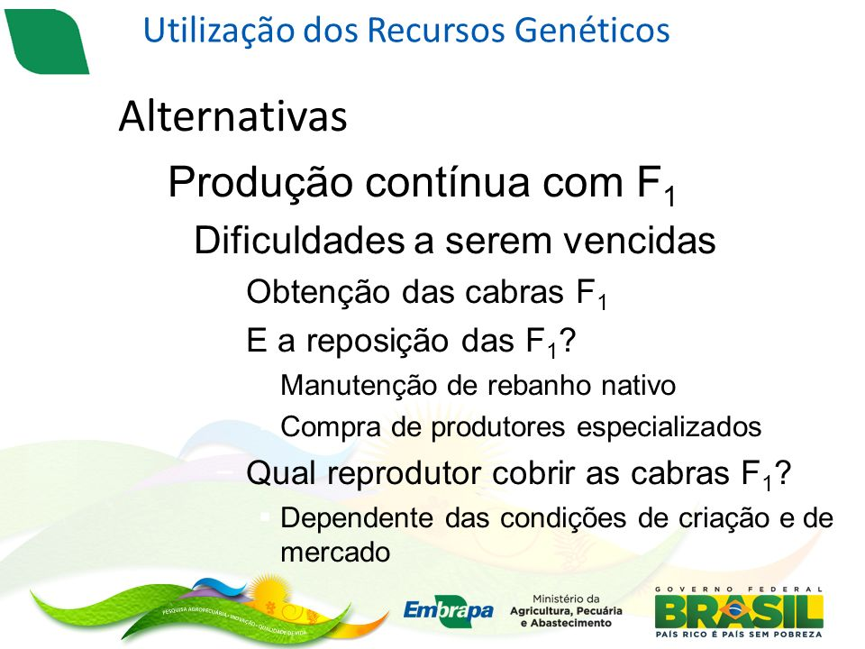 Alternativas – Produção contínua com F 1 Dificuldades a serem vencidas Obtenção das cabras F 1 E a reposição das F 1 .