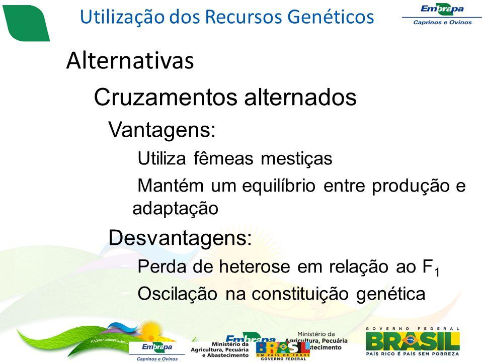 Alternativas – Cruzamentos alternados Vantagens: Utiliza fêmeas mestiças Mantém um equilíbrio entre produção e adaptação Desvantagens: Perda de heterose em relação ao F 1 Oscilação na constituição genética Utilização dos Recursos Genéticos