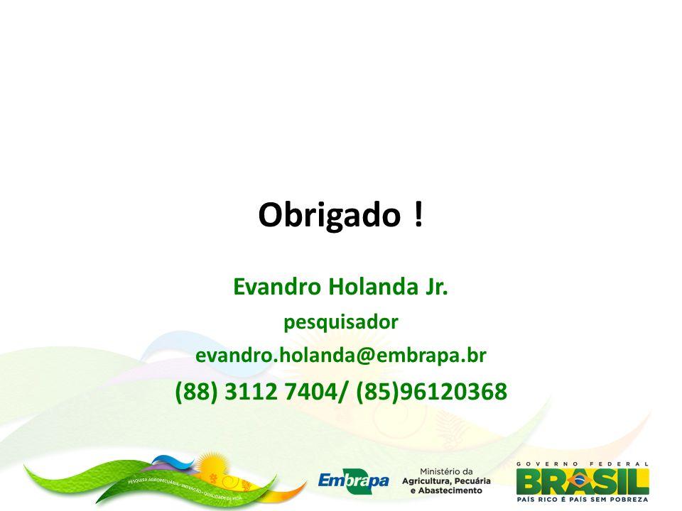 Obrigado ! Evandro Holanda Jr. pesquisador evandro.holanda@embrapa.br (88) 3112 7404/ (85)96120368