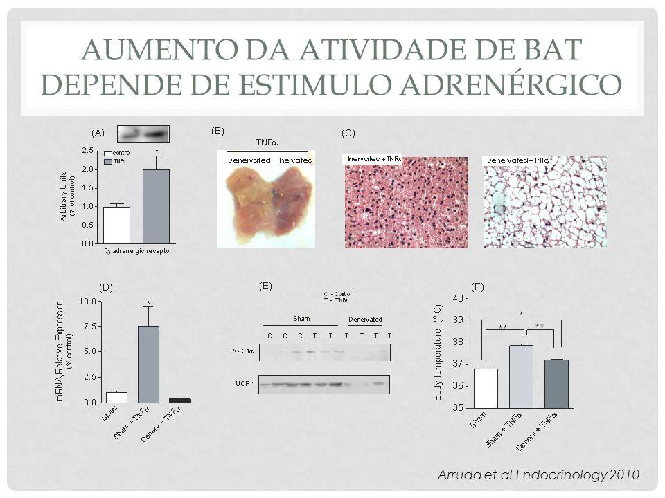 AUMENTO DA ATIVIDADE DE BAT DEPENDE DE ESTIMULO ADRENÉRGICO Arruda et al Endocrinology 2010