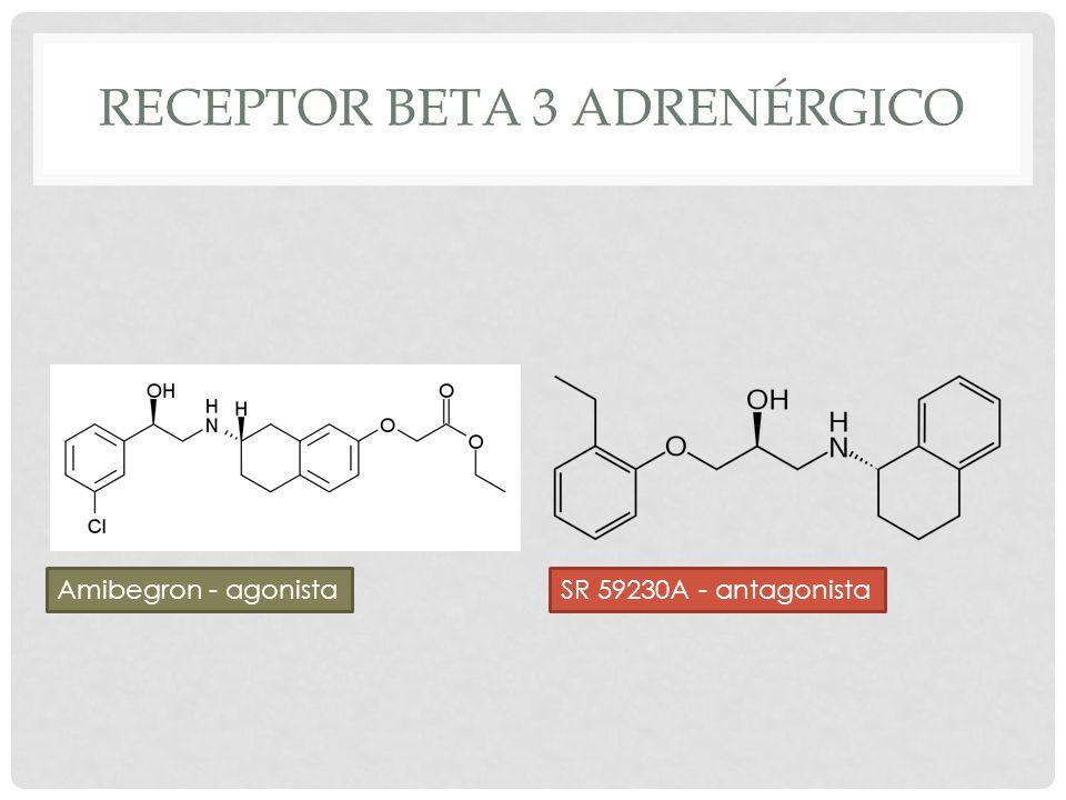 RECEPTOR BETA 3 ADRENÉRGICO SR 59230A - antagonistaAmibegron - agonista