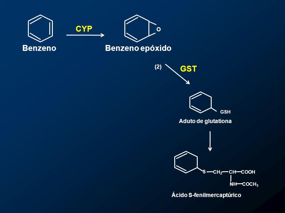 O Benzeno epóxidoBenzeno GSH S CH 2 CHCOOH NHCOCH 3 Aduto de glutationa Ácido S-fenilmercaptúrico GST (2) CYP