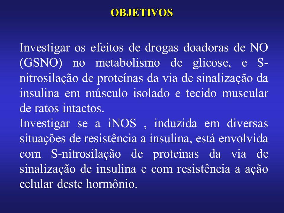 OBJETIVOS Investigar os efeitos de drogas doadoras de NO (GSNO) no metabolismo de glicose, e S- nitrosilação de proteínas da via de sinalização da insulina em músculo isolado e tecido muscular de ratos intactos.