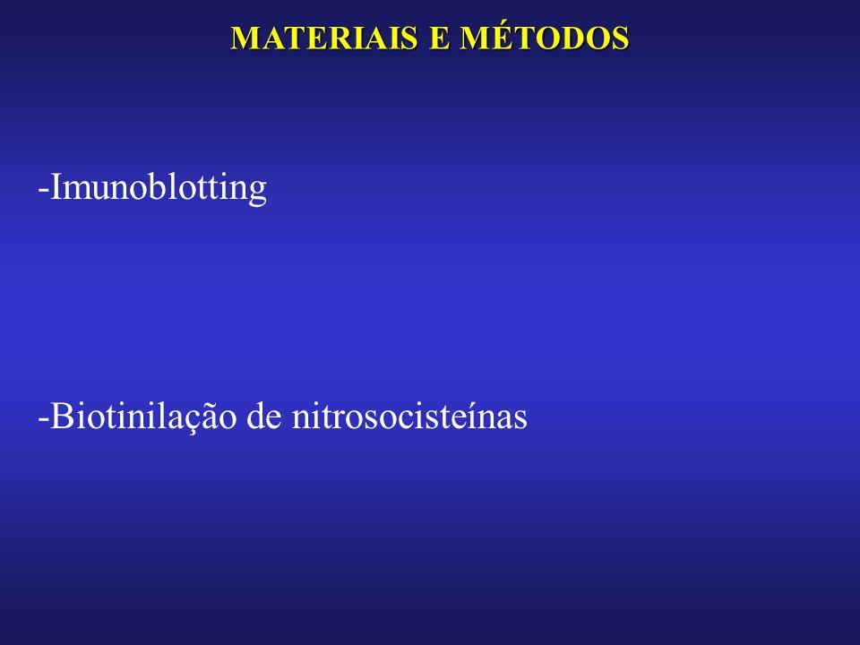 MATERIAIS E MÉTODOS -Imunoblotting -Biotinilação de nitrosocisteínas