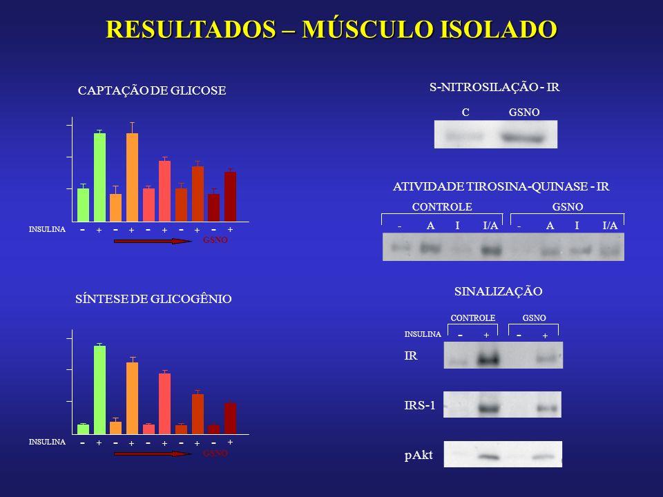 RESULTADOS – MÚSCULO ISOLADO CAPTAÇÃO DE GLICOSE - INSULINA - + ---- +++ + GSNO SÍNTESE DE GLICOGÊNIO - INSULINA - + ---- +++ + GSNO S-NITROSILAÇÃO - IR CGSNO ATIVIDADE TIROSINA-QUINASE - IR CONTROLEGSNO -A I I/A-A I SINALIZAÇÃO INSULINA - + - + CONTROLEGSNO IR IRS-1 pAkt