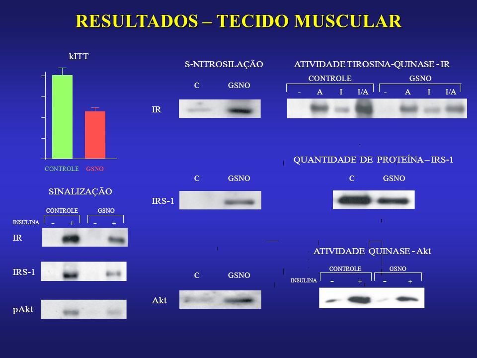 RESULTADOS – TECIDO MUSCULAR CONTROLEGSNO kITT S-NITROSILAÇÃO CGSNO IR ATIVIDADE TIROSINA-QUINASE - IR CONTROLEGSNO -A I I/A-A I IRS-1 QUANTIDADE DE PROTEÍNA – IRS-1 CGSNOC Akt CGSNO ATIVIDADE QUINASE - Akt INSULINA - + - + CONTROLEGSNO SINALIZAÇÃO INSULINA - + - + CONTROLEGSNO IR IRS-1 pAkt