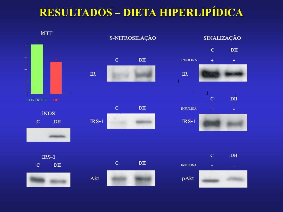 RESULTADOS – DIETA HIPERLIPÍDICA CONTROLEDH kITT iNOS CDH IRS-1 CDH S-NITROSILAÇÃO CDH IR SINALIZAÇÃO CDH IR INSULINA + + IRS-1 CDH IRS-1 CDH INSULINA + + Akt CDH pAkt CDH INSULINA + +