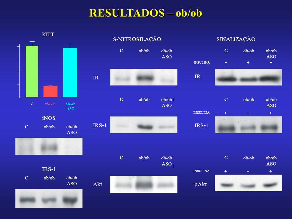 RESULTADOS – ob/ob kITT Cob/ob ASO iNOS Cob/ob ASO IRS-1 Cob/ob ASO S-NITROSILAÇÃOSINALIZAÇÃO IR INSULINA +++ Cob/ob ASO Cob/ob ASO IRS-1 INSULINA +++ Cob/ob ASO Cob/ob ASO AktpAkt INSULINA +++ Cob/ob ASO Cob/ob ASO