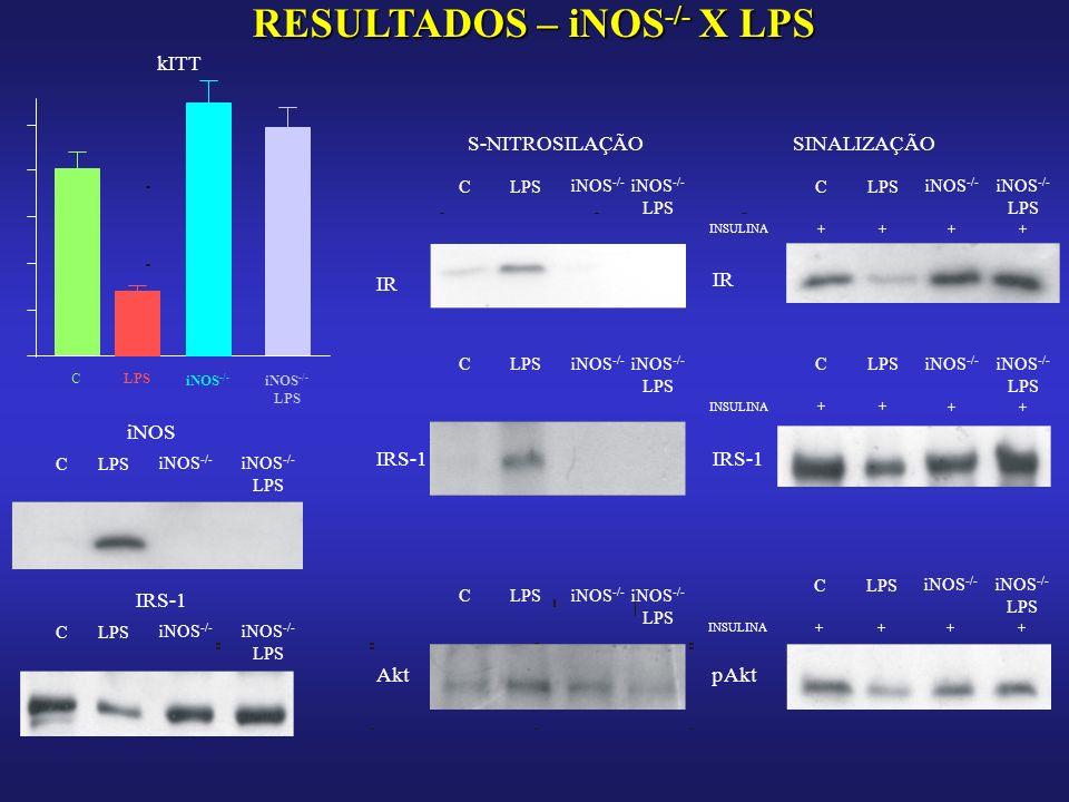 RESULTADOS – iNOS -/- X LPS kITT CLPS iNOS -/- LPS iNOS CLPS iNOS -/- LPS IRS-1 CLPS iNOS -/- LPS S-NITROSILAÇÃOSINALIZAÇÃO IR CLPS iNOS -/- LPS INSULINA + C + LPS + iNOS -/- LPS + IRS-1 INSULINA + C + LPS + iNOS -/- LPS + C iNOS -/- LPS AktpAkt INSULINA + C + LPS + iNOS -/- LPS + C iNOS -/- LPS
