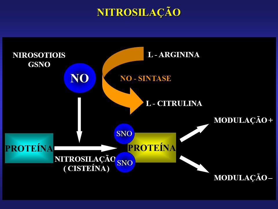 NITROSILAÇÃO NO PROTEÍNA NITROSILAÇÃO ( CISTEÍNA ) SNO MODULAÇÃO + MODULAÇÃO – L - ARGININA L - CITRULINA NO - SINTASE NIROSOTIOIS GSNO
