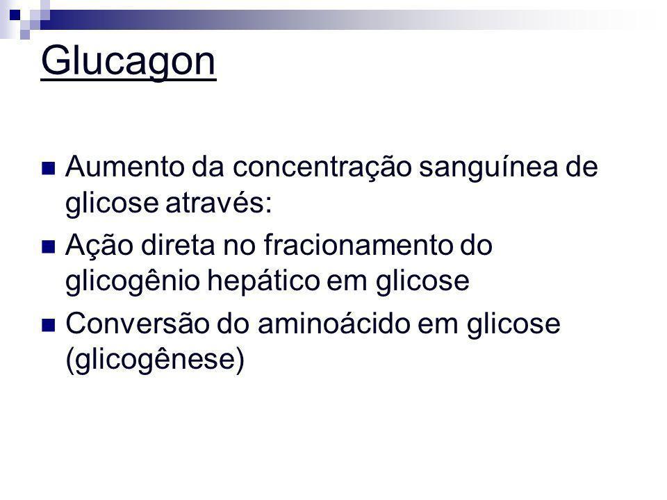 Glucagon Aumento da concentração sanguínea de glicose através: Ação direta no fracionamento do glicogênio hepático em glicose Conversão do aminoácido