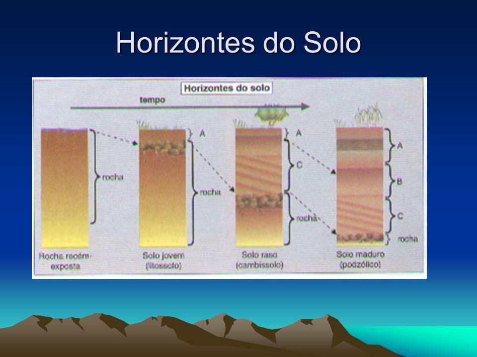Os horizontes e suas características HorizonteCaracterística O É o horizonte superficial pode conter mais de 20% de matéria orgânica em diferentes graus de decomposição AApresenta grande quantidade de material decomposto e misturado com minerais.