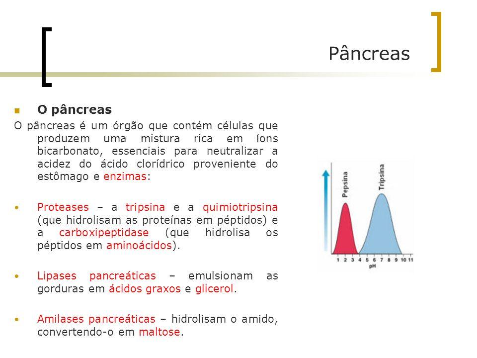 Pâncreas O pâncreas O pâncreas é um órgão que contém células que produzem uma mistura rica em íons bicarbonato, essenciais para neutralizar a acidez d