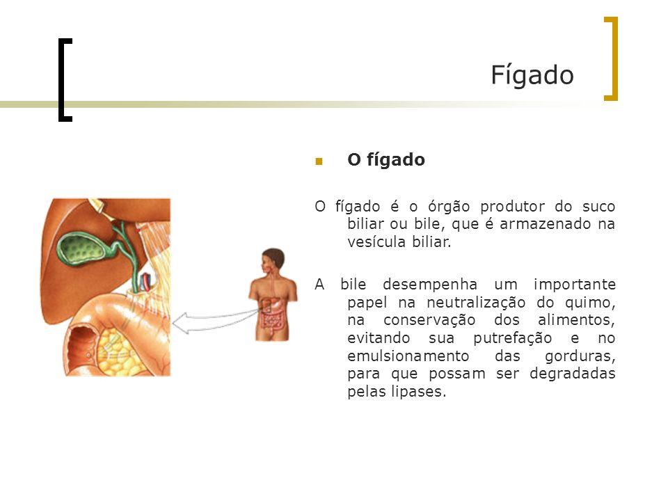 Fígado O fígado O fígado é o órgão produtor do suco biliar ou bile, que é armazenado na vesícula biliar. A bile desempenha um importante papel na neut