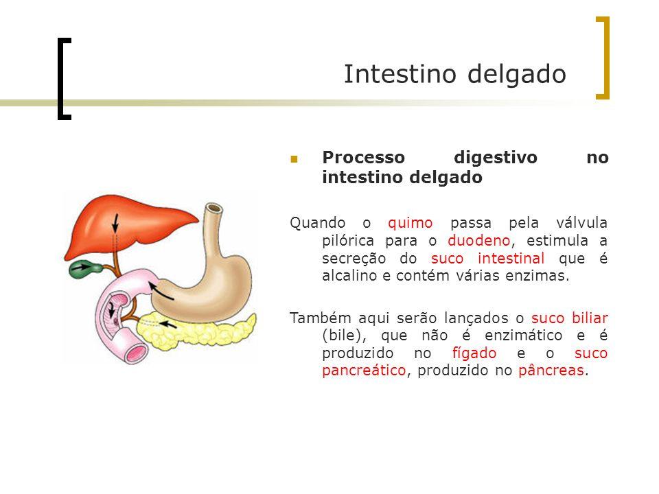 Intestino delgado Processo digestivo no intestino delgado Quando o quimo passa pela válvula pilórica para o duodeno, estimula a secreção do suco intes