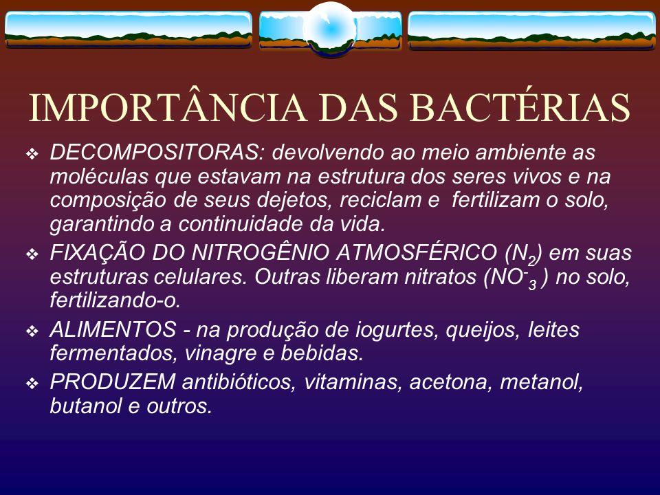 IMPORTÂNCIA DAS BACTÉRIAS DECOMPOSITORAS: devolvendo ao meio ambiente as moléculas que estavam na estrutura dos seres vivos e na composição de seus de