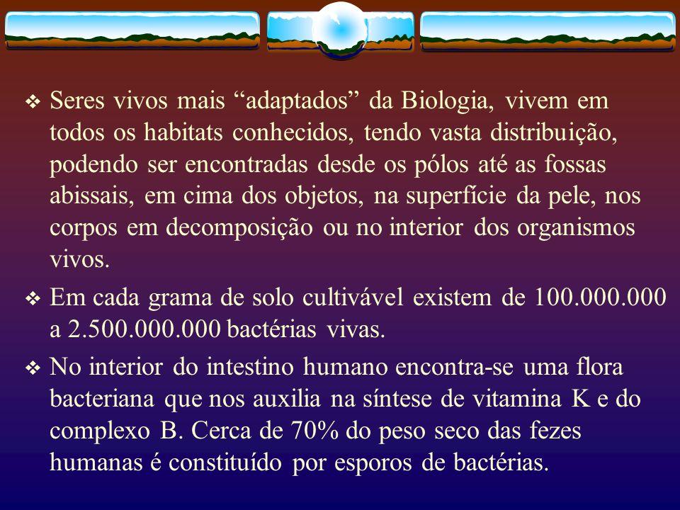 Classificação- grupos de Bactérias Atualmente compõem dois Domínios(Archaea e Eucharia) O Reino Monera é dividido em duas Divisões(Filos): Schizomycophyta (bactérias) e Cyanophyta (algas cianofíceas)