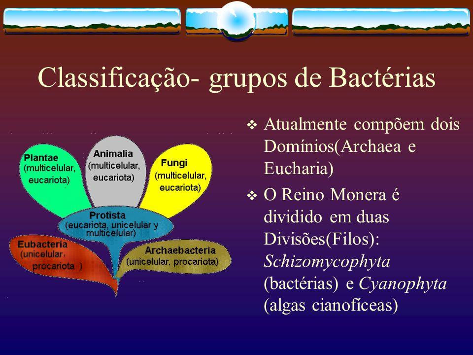 Classificação- grupos de Bactérias Atualmente compõem dois Domínios(Archaea e Eucharia) O Reino Monera é dividido em duas Divisões(Filos): Schizomycop