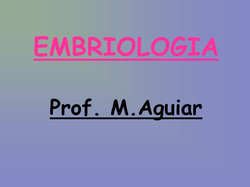 EMBRIOLOGIA Prof. M.Aguiar